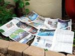 Газеты против сорняков! Простая и дешёвая защита для цветника