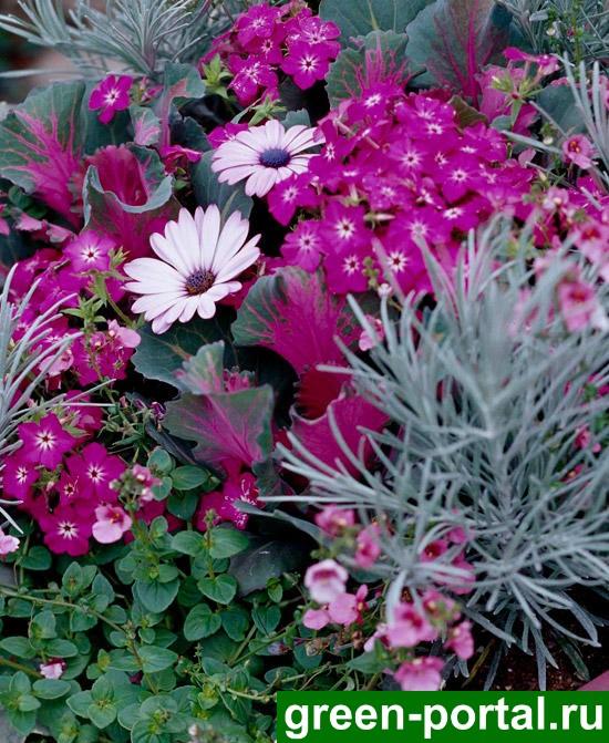 Цветы и листья розового цвета