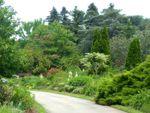 Вечнозеленый миксбордер: хвойные в смешанных цветниках