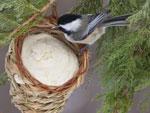Ёлка-кормилица: новогодние подарки для птиц