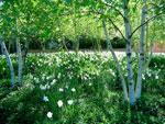 Красота и польза. Энциклопедия лекарственных растений для вашего сада (часть 1)