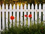 Установить границы, или красивая изгородь на участке