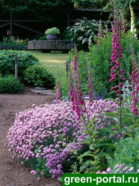 Розовый островок в саду