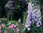 Сад в розовом цвете