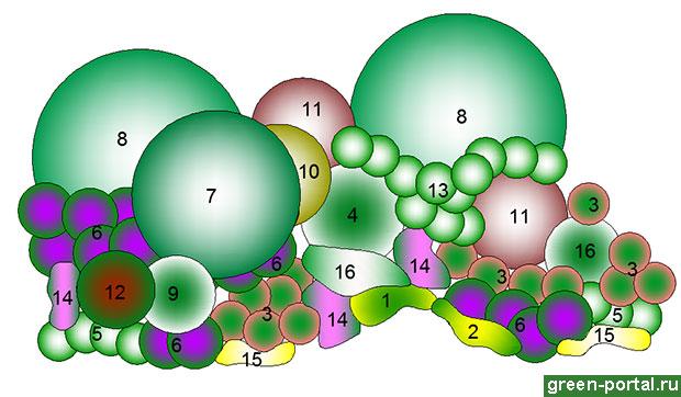 Схема группы
